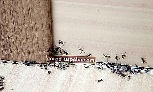 Evdeki karıncalarla nasıl savaşılır?