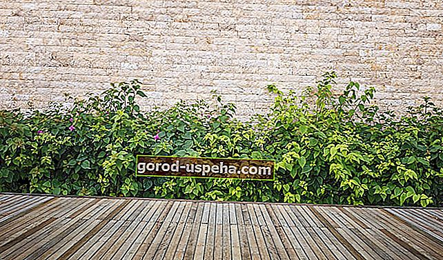 Kako koristiti ocat za korov terase?
