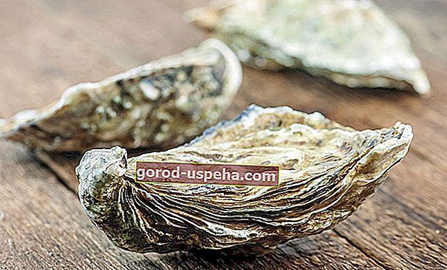 4 stvari sa školjkama od kamenica