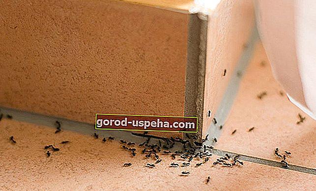 Как да се борим срещу нашествие на мравки?