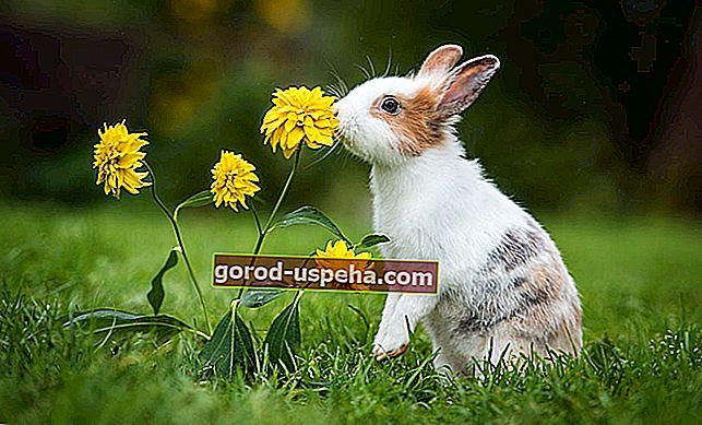 Cum împiedicați iepurii să invadeze grădina?