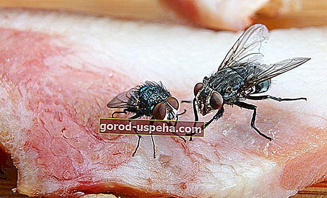Cum să faci singur o respingere a muștelor?