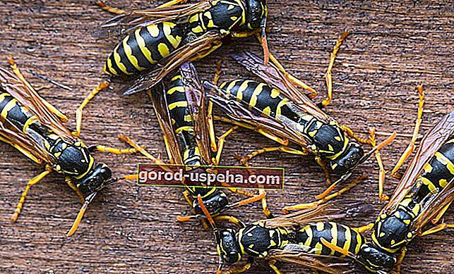 7 sfaturi practice pentru a scăpa de viespi