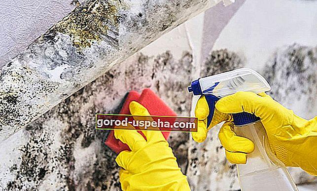 Как удалить пятна плесени со стен?