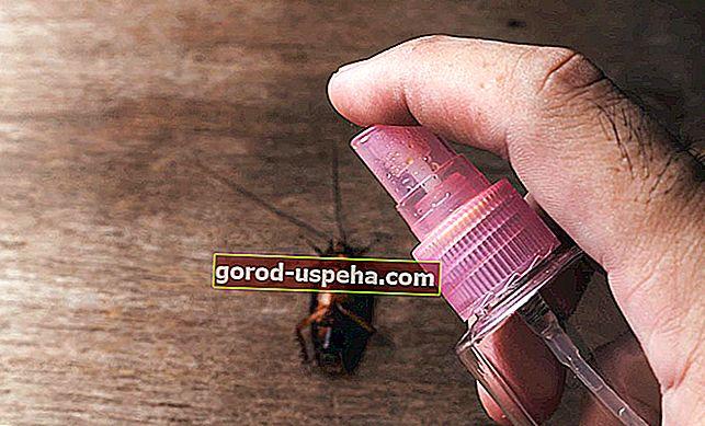 Vodič: napravite sami svoj repelent za žohare