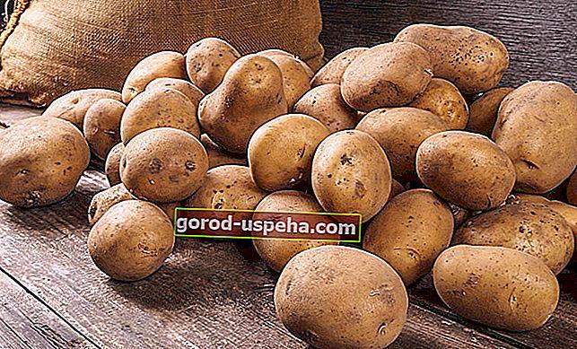 8 методов правильного хранения картофеля