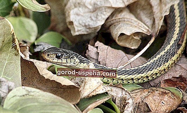 Cum să scapi de reptilele din grădină?