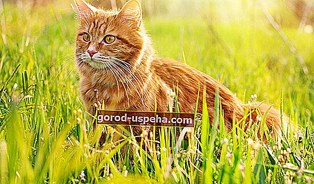Kako spriječiti mačku da mokri u svom vrtu?