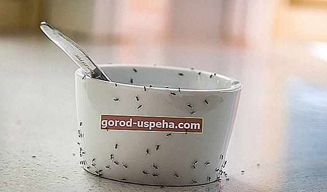 Folosiți oțet pentru a respinge eficient furnicile