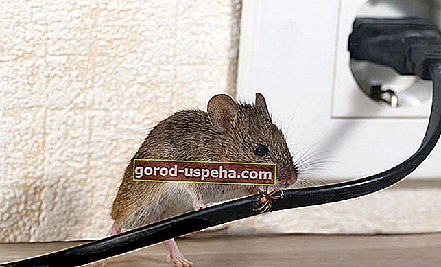 9 съвета за постоянно държане на мишки далеч