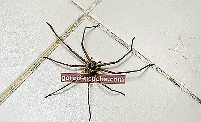 Ефективно се борете срещу паяци у дома